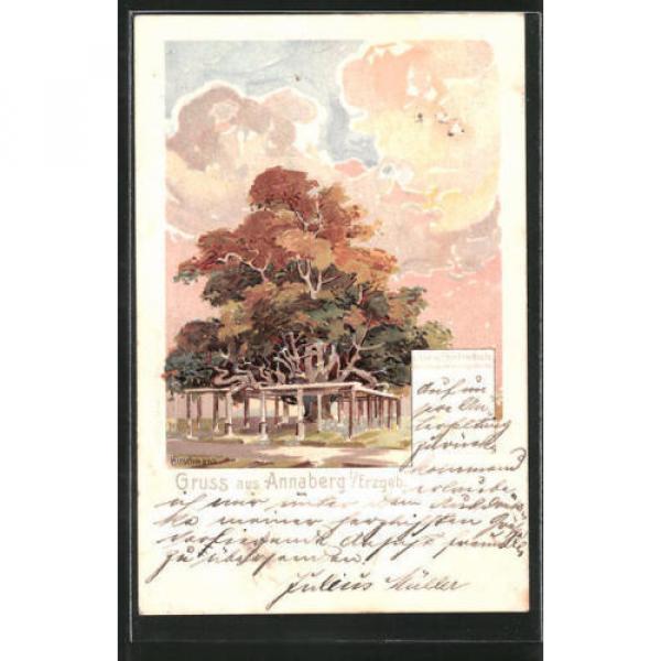 schöne Lithographie Annaberg, Linde auf dem Friedhofe 1901 #1 image