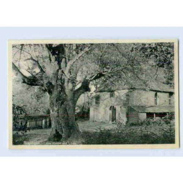 K136-3045/ Bispingen Kirche und Linde Baum  AK 1937 #1 image