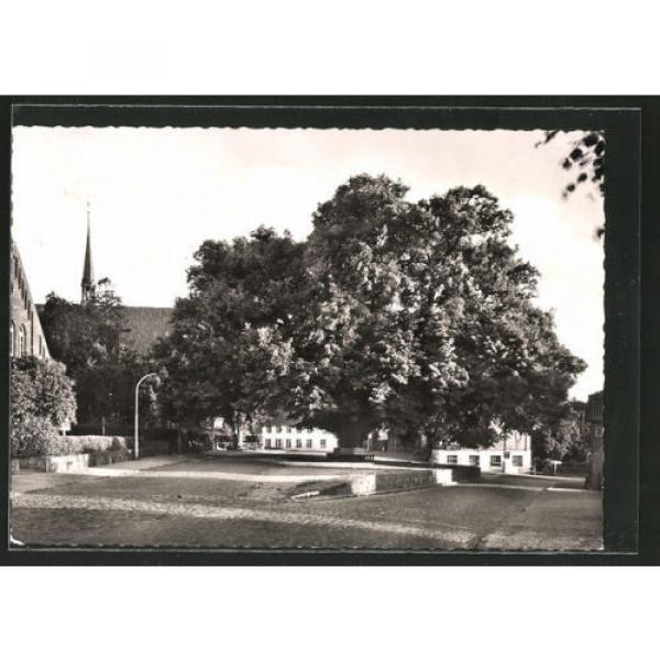 tolle AK Bordesholm, 300jährige Linde 1964 #1 image