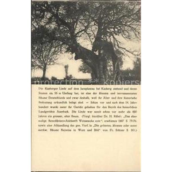 41611129 Baeume Trees Kasberger Linde Pflanzen #1 image