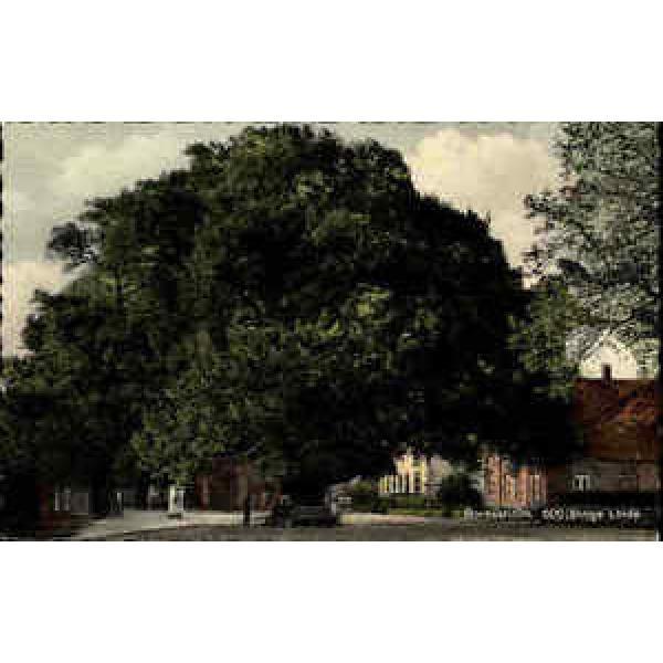 Bordesholm ~1950/60 Partie 600jährige Linde Baum Wahrzeichen Platz Menschen Haus #1 image